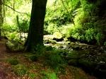 Woods of Killarney National Park